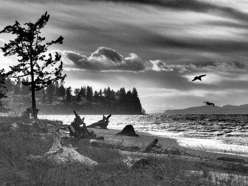 Birch Bay Mood Washington
