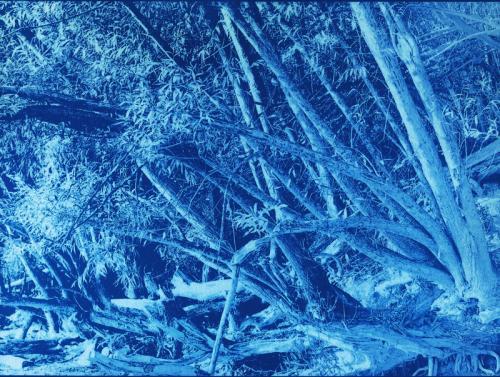Cyanotype Eloge arbre