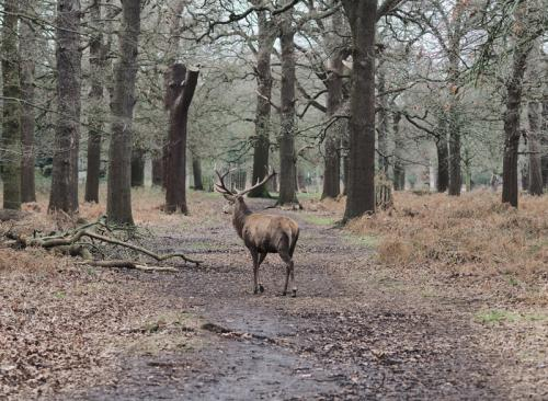 Elegance Richmond Park